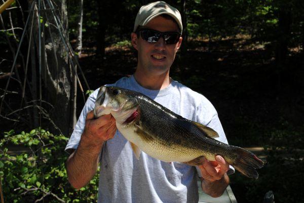 Post spawn bass on lake gaston hitting topwater baits for Lake gaston fishing