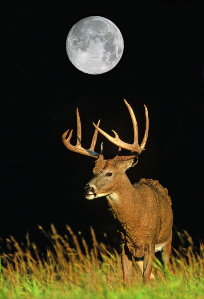 Deer Movement Chart . Moving during dusk dawn during this Moon Phase