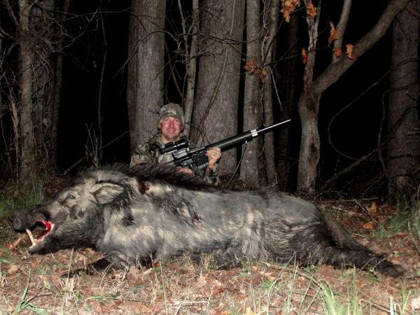 Expanding population of wild hogs giving north carolina for Nc hunt and fish