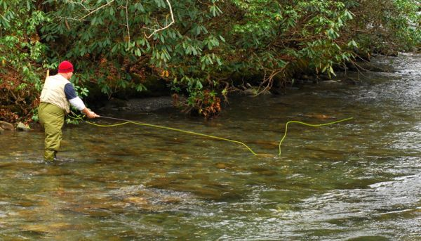 Hazel creek in the great smoky mountains national park is for Best trout fishing in nc