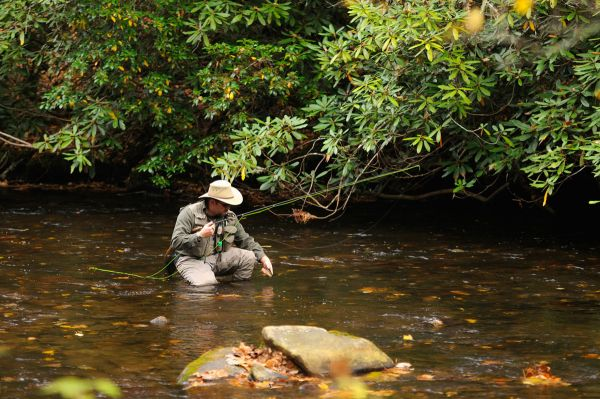Thanksgiving trout sample november s bounty on north for Davidson river fly fishing