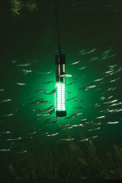 new high-tech night-fishing light - carolina sportsman marine, Reel Combo