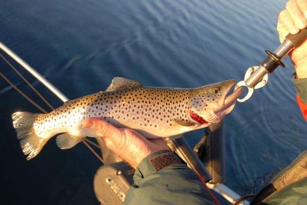 Cheoah lake stays cool enough to hold great trout fishing for Fontana lake fishing