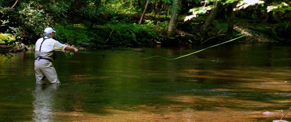 The great smoky mountains national park 39 s best streams for for Best trout fishing in nc