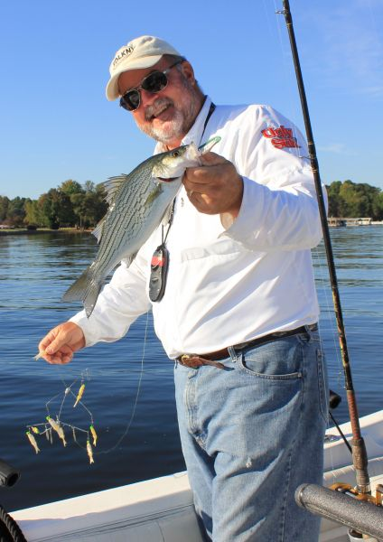 Ncwrc Awarding 100 For Tagged Hybrid Striped Bass On Lake