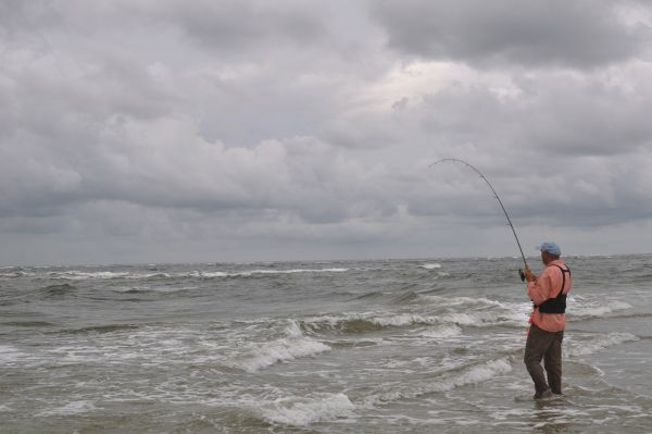 Ride the surf for north carolina s winter redfish for Surf fishing nc