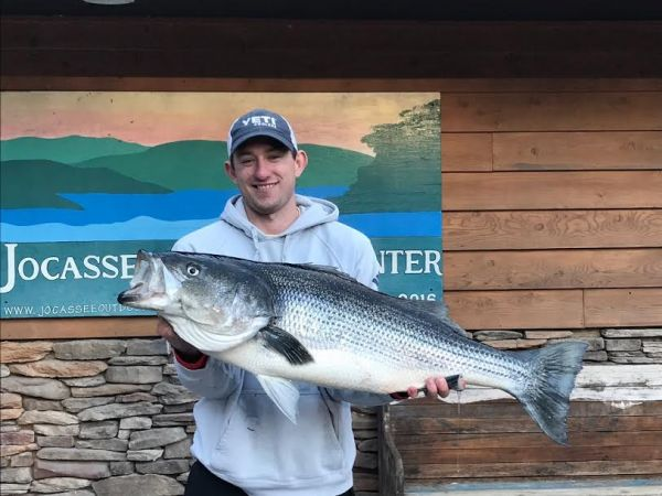 Big striper catches trout anglers by surprise on lake jocassee for Nc fishing regulations 2017