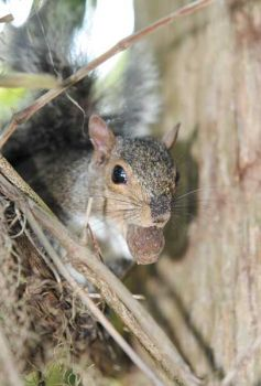 Get in an area where squirrels are foraging and you can stalk or sit and wait until you get a bushytail in your sights.