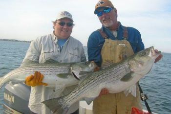 The discussion continues regarding Striped Bass receiving gamefish status