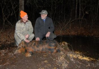 Wildlife officials hope that opening more opportunities for hunters to take wild hogs will allow sportsmen to keep the population under control.