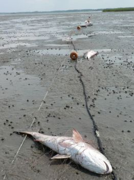 The Coastal Fisheries Reform Group has announced it will seek a total gill-net ban along the North Carolina coast because the state Legislature has refused to act on proposed gamefish status for red drum and speckled trout.