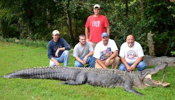 Tim Roth, Scott Morin, Travis Smith, Chris Farrell, and Donald Caldwell (standing) pose beside a massive 13-foot-3 alligator that