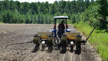 Spring plantings of warm-season food plots will provide deer with tremendous nutrition at a time it's most needed.