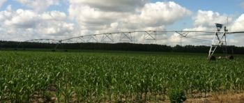 Applying fertilizer when the soil is holding the proper amount of water will greatly enhance the crop.