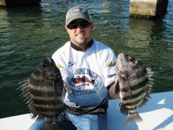 Sheepsheaad fishing around the bridges in the Morehead City area has been excellent over the past week.