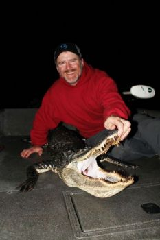 Alligator season returns to South Carolina in September.