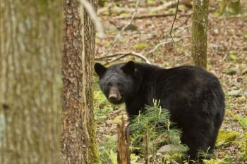 SCDNR enforcement officers have taken possession of six black bears from permitted pens and transferred them to a wildlife rehabilitation center in Colorado, effectively ending the practice of