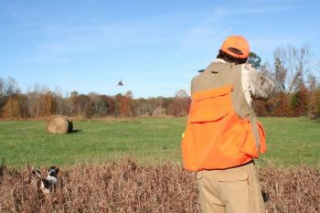 What a holiday treat! Good-flying quail, good bird dogs and some great meals! All are available at hunting preserves across South Carolina.