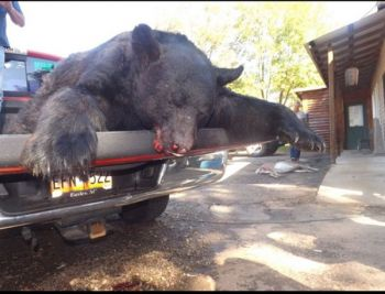 A state-record bear highlighted a record-setting season in the Upstate last month.