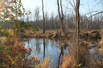 Beaver ponds usually have enough natural vegetation that building a makeshift blind is not difficult.