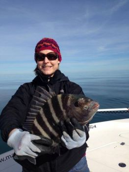 Big sheepshead are available at a handful of nearshore reefs out of Murrells Inlet, weather permitting