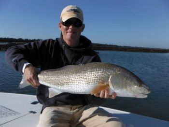Capt. Jeff Bennett has been finding redfish in huge schools on flats around Charleston, catching them on cut bait and a variety of artificials.