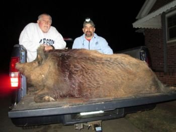 Marcus Church killed this 460-pound hog that he and hunting buddy Allen Crenshaw had patterned on a farm near Six Mile.