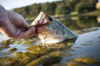 On North Carolina lakes, June is a fantastic month to catch largemouth bass because they're hungry and they're not particular about the baits they'll bite.