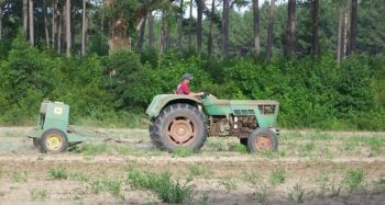 Waiting for proper soil moisture and planting seeds at the proper depth are two crucial factors in having a successful cool-season food plot.