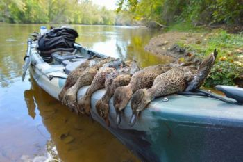 The sudden appearance of tremendous numbers of teal made the short, early segment of duck season a winner for many North Carolina hunters.
