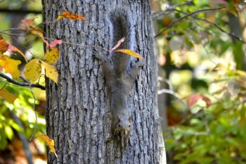 Taking a squirrel or two while deer hunting doesn't have to run your chances at a whitetail.