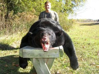 Eastern North Carolina produces some of the biggest black bear of anywhere in the nation