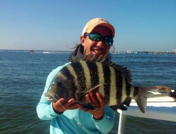 John Fuss of Holy City Fishing Charters said it's big sheepshead time in the waters around Charleston.