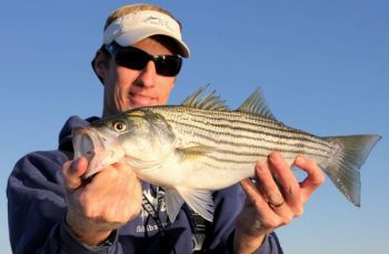 Guide MItchell Blake takes care of the striped bass for sportsmen who want to a cast-and-blast experience on the water around the Albemarle Sound and Roanoke River.