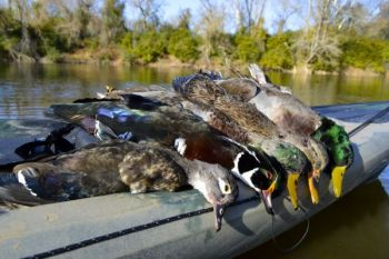 Plenty of ducks have moved on to South Carolina, and according to biologists and Ducks Unlimited, birds from the mid-Atlantic states haven't filled in North Carolina's holes yet.