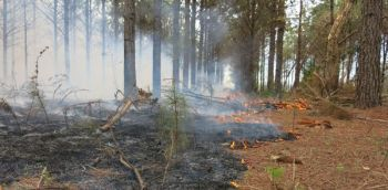 Prescribed burning has many benefits for almost every wildlife species.