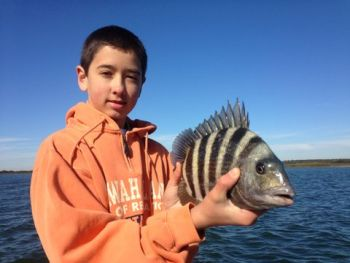 Not all sheepshead have moved into the ocean around nearshore reefs; there are plenty left inshore, according to Capt. Mike Waller of Kiawah Island.