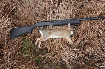 A semi-automatic shotgun like Remington's Versa Max is a good fit for rabbit hunters, who often need to get off several shots in quick succession.
