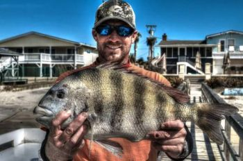Nearshore reefs off the Grand Strand are full of sheepshead, according to Capt. Jay Sconyers of Aces Up Fishing Charters.