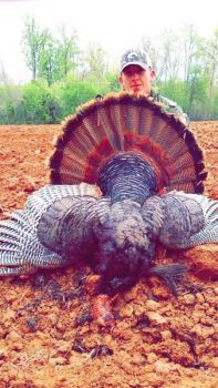 Zach Satterfield of Reidsville killed this 24 1/2-pound Rockingham County gobbler with 1 1/2-inch spurs and beards measuring 11 and 10 inches.