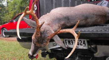 The goal of almost all deer hunters is to harvest a mature, bragging-sized buck, but habitat loss might be forcing hunters to settle for less.