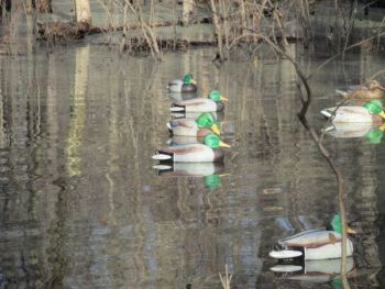 A small decoy spread is all hunters need in most duck-hunting situations.