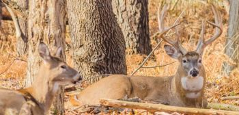 Running into a big buck during the last weeks of deer season normally takes a change in tactics or areas.