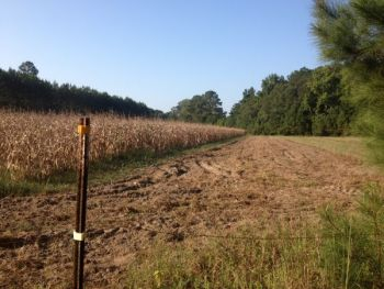 Knocking down the last rows of corn, soybeans, sunflowers or millet in your dove field should provide plenty of late-season wing shooting.