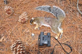 A call like the Mr. Squirrel Whistle and a good pair of binoculars are great additions to a squirrel hunter's arsenal.