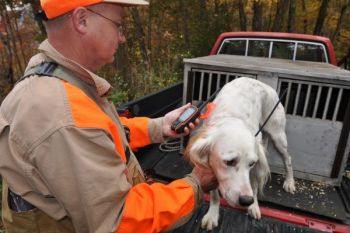 Lindy Ammons' setter, Clyde, wears a GPS tracking collar that helps Ammons keep track of him when he's hunting grouse in heavy cover.