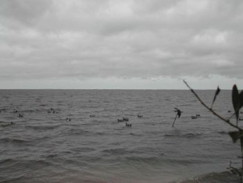 Although huge decoy spreads on big water are a given late in the season, make sure the decoys farthest from your blind are still well within shotgun range.
