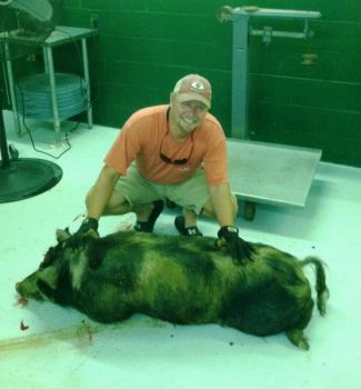 Proper handling and processing of wild hogs is key to preventing the spread of hog diseases.