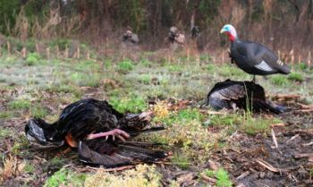 Even though turkey season is over a month away, it's not too early to start scouting.