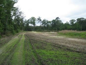 Plowing under fall food plots and replacing them with warm-season mixes for spring and summer to offer bobwhites with food and cover.